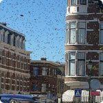 Bees swarm in Bankastraat!