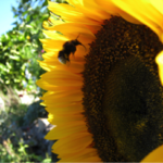 """Friday, May 18: SAVE THE BEES  """"What is of value"""""""