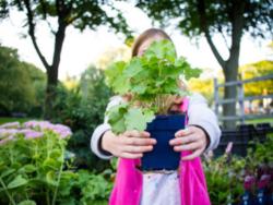 Dag van de Duurzaamheid: ruil je tegels om voor planten