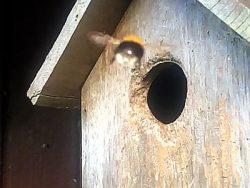 Vogelhuis gekraakt