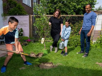 The Hague hands out 1,000 trees