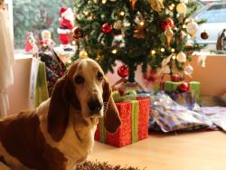 Christmas Market  for Dogs - Saturday,  December 14th