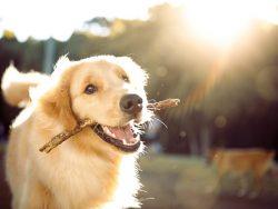 Municipality checking dog tax